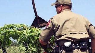 Massive Texas marijuana bust could make state history
