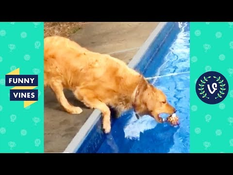 TRY NOT TO LAUGH - FUNNY PETS & ANIMALS | Funny Videos September 2018