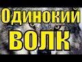 Песня ОДИНОКИЙ ВОЛК Виталий Цаплин красивый русский шансон лучшее клипы блатные песни для души клип mp3
