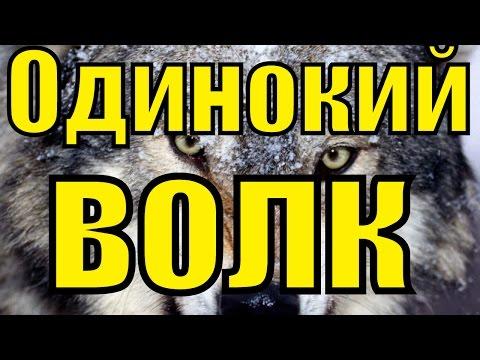 Песня ОДИНОКИЙ ВОЛК Виталий Цаплин красивый русский шансон лучшее клипы блатные песни для души