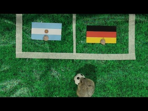 Tiny Hamster Predicts 2014 World Cup Finals - Germany vs Argentina