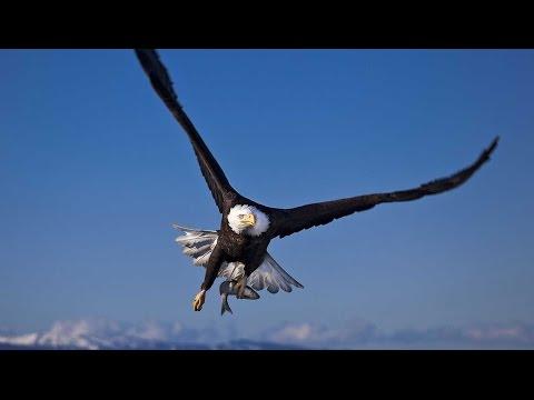 El vuelo rasante de un águila en los aires de Dubai