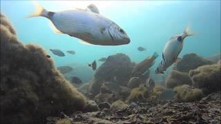 jadranska riba