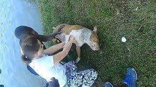 Giải cứu chú chó bị chết đuối, trái tim như muốn tan chảy