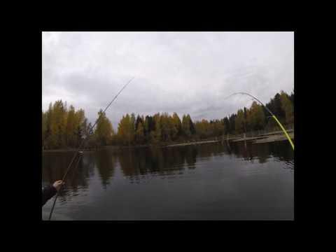рыбалка в йошкар оле цена