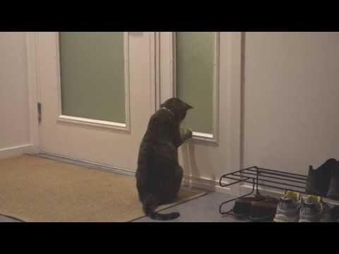The Adventures of Oskar the Blind Cat and Klaus - Episode 6 - Parkour Pussycat