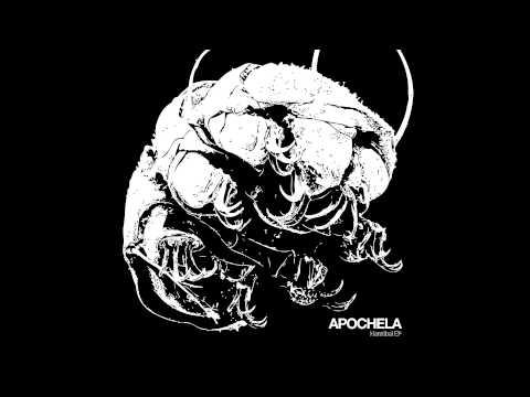Header of apochela
