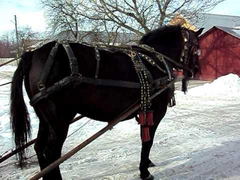 cel mai bun cal din andrsesti