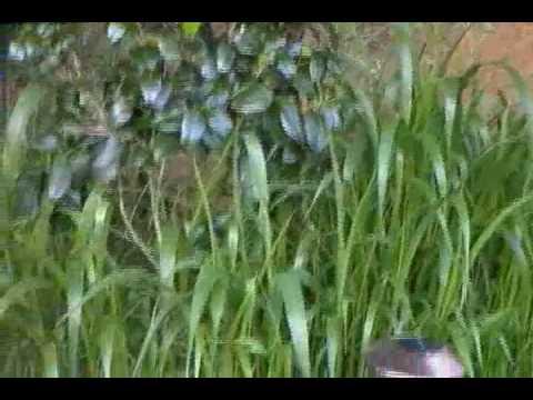 Sunny Lane - Walkertown, Nc - Part 1 video