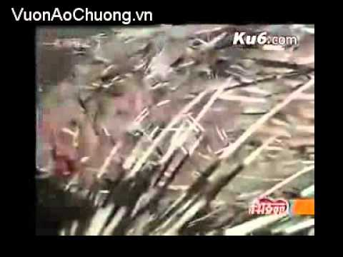 Nuôi Nhím Tại Trung Quốc,Phần 4,Kỹ Thuật Nuôi Nhím