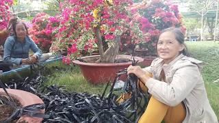 Đi Chợ Hoa Tết Sài Gòn 2019 ngắm hoa nghe tâm sự người làm Đẹp cho đời