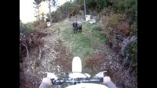 Motorcyclist gets ambushed by the Angry Ram