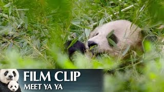 """Meet Ya Ya"" Clip - Disneynature"