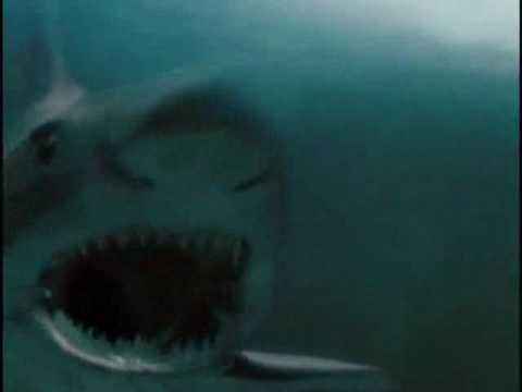 Duelo Animal   Crocodilo e tubarão branco