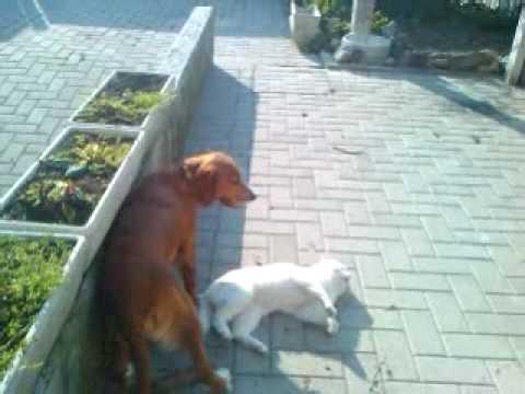 Animali divertenti – Rossella che gioca con il Gatto sordo Ufe