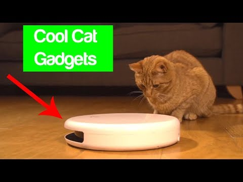 Your Cat Will Love These Gadgets