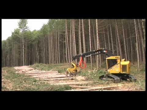 Red Pine Harvest - Windham County Vermont