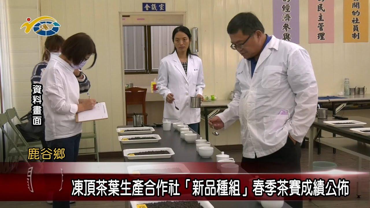 20210514 民議新聞 凍頂茶葉生產合作社「新品種組」春季茶賽成績公佈