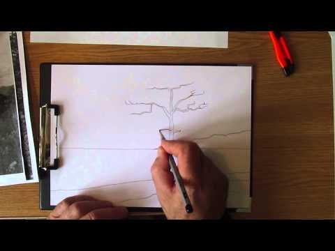 Видео как нарисовать сосну карандашом поэтапно