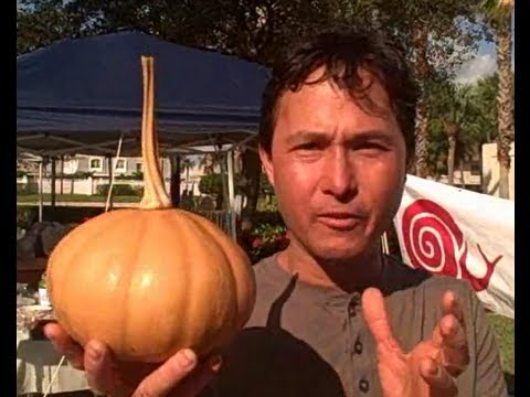 Rare Heirloom Perennial Native American Hanging Pumpkin Stores Up to a Year