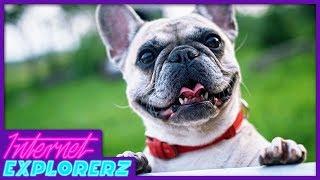 Funny Dog Videos - Internet Explorerz (Ep. 7)