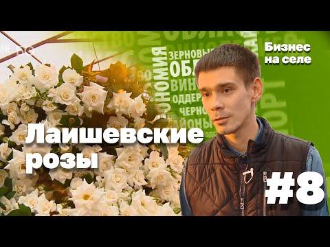 Бизнес на селе #8. Лаишевские розы, как венец цветочного импортозамещения