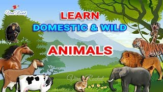 Learn Animal names for Kids in English   Domestic Animals & Wild Animals for Children - VIRAL ROCKET