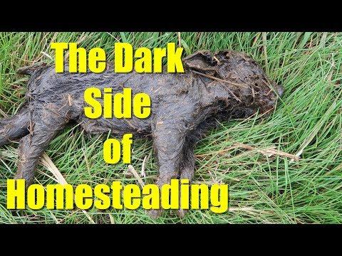 The Dark Side of Homesteading