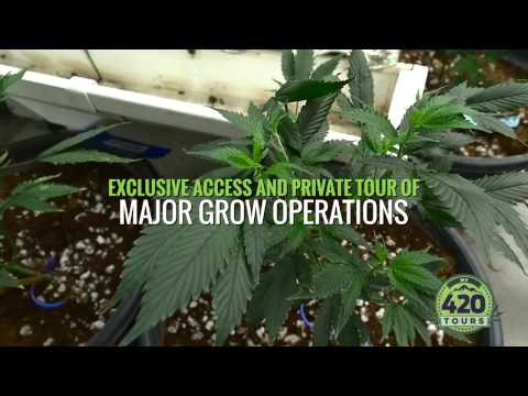 Pot Tours Denver - Cannabis Tour Colorado - My 420 Tours