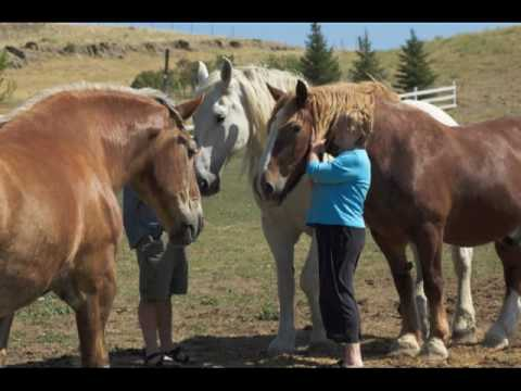 United In Light, Inc, home to the draft horse sanctuary. Serving mature ...