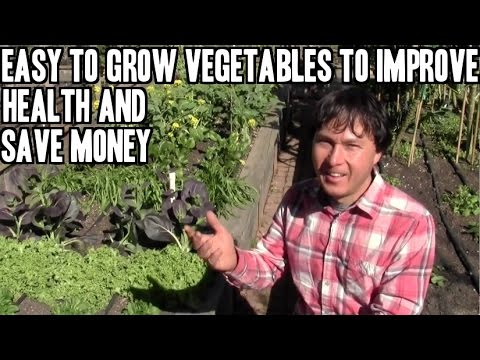 Easy to Grow Vegetables to Improve Health and Save Money & more Q&A