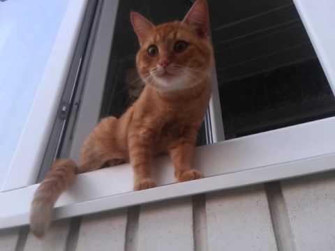 Милый рыжий кот охраняет свой балкон