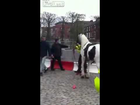 Horse Humps Cop! (video) video