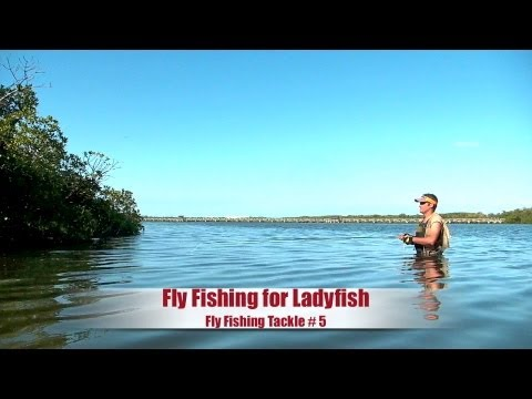 West Palm Beach Fly Fishing for Jacks and ladyfish - HD # 02