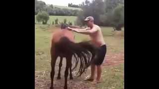 VIDEOS PARA WHATSAPP - Como NO subir al caballo