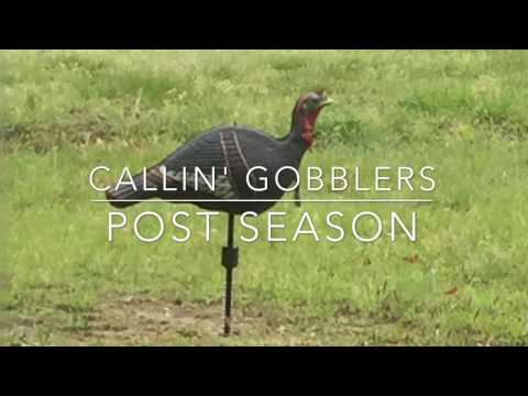Calling Turkey Post Season