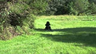 Download LITTLE BIGFOOT CAUGHT ON TAPE 3Gp Mp4