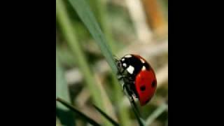 SAIT Close-up Nature Photography