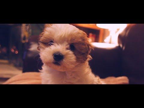 Puppy's First Christmas - Kiskutya első karácsonya