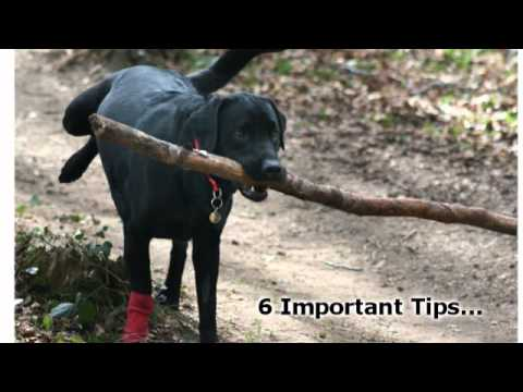 Train Your Dog - 6 Important Dog Training Tips For Obedience Training video