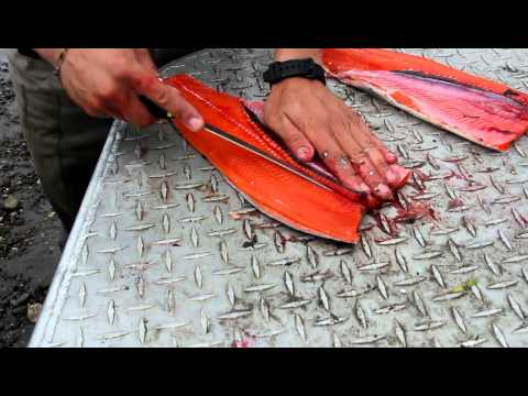 How to fillet a fresh silver salmon