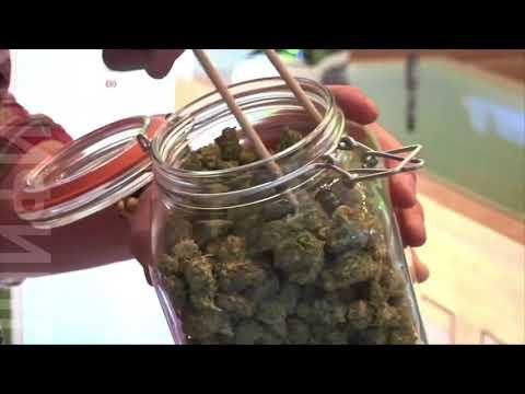 Диплом по марихуане