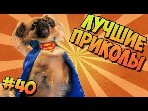 ЛУЧШИЕ ПРИКОЛЫ #40 ПЁС ПАТИМЕЙКЕР