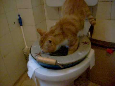 Cat suddenly pooping and peeing on floor