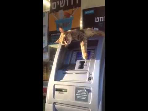 Cat on ATM by הצינור via 4GIFs.com