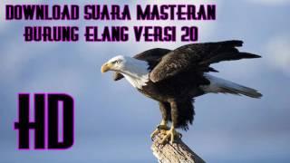 Download Suara Masteran Burung Elang Versi 20 Full HD