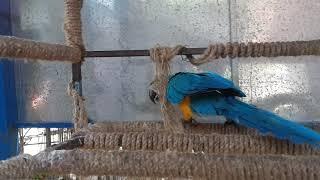 Очень милый смешной попугай какаду прикол ржака,very sweat funny parrot lol fun chat bird awesome