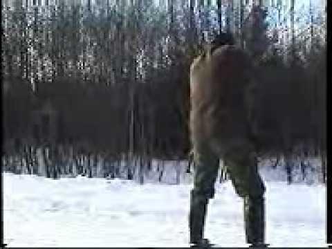охота на дикого секача в загоне