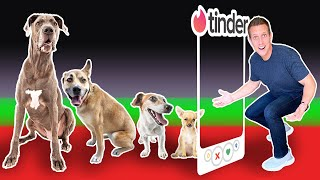 Tinder in Real Life..but for DOGS!