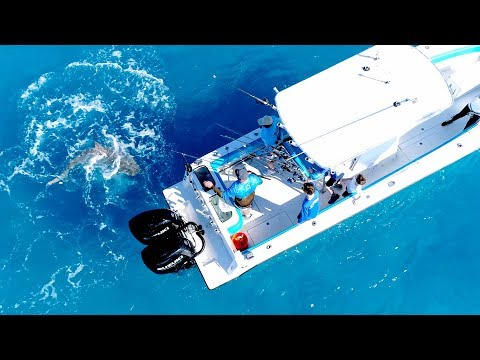 Angry Bull Shark Randomly Attacks 30ft Boat - 4K